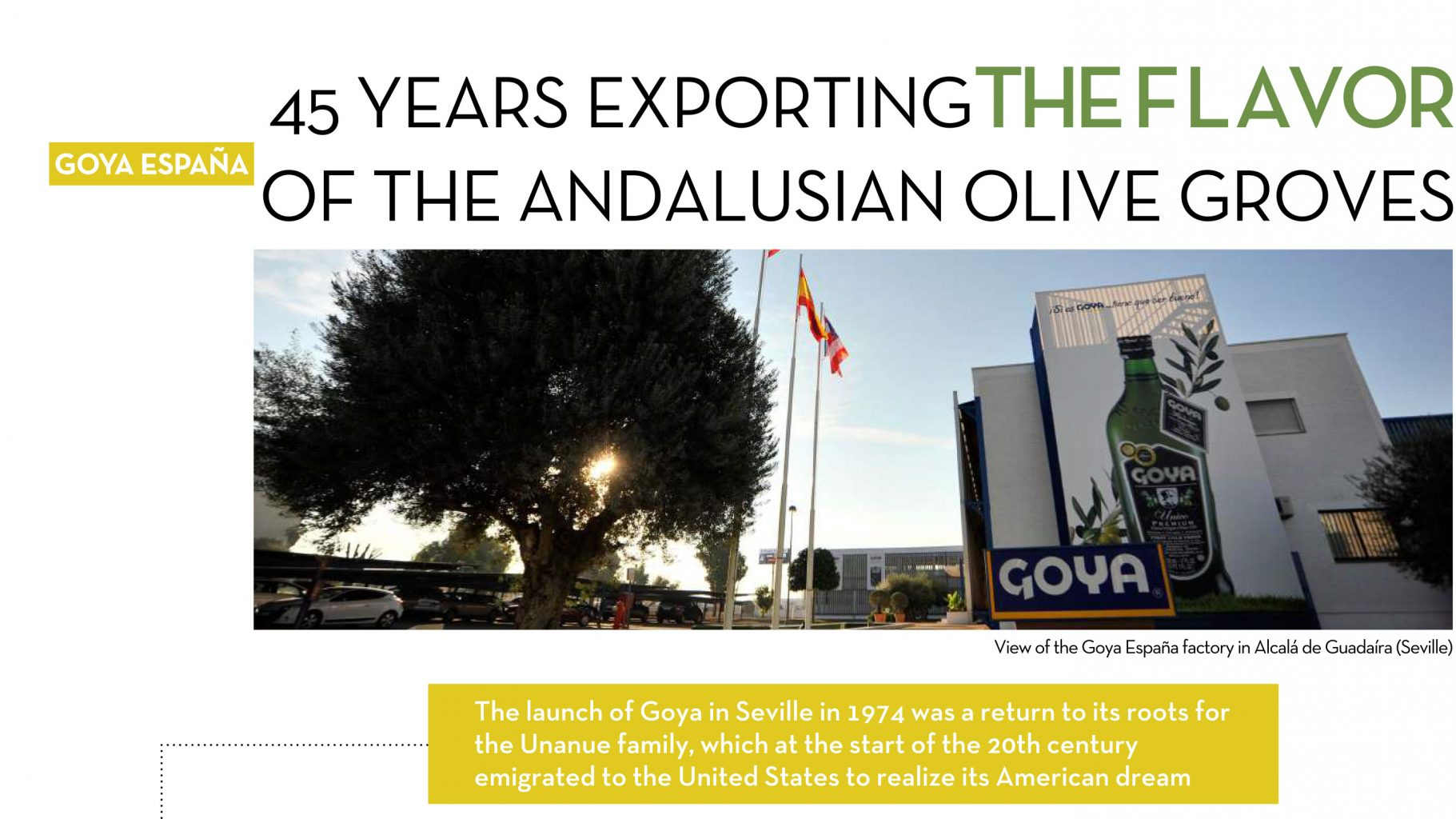 ABC Goya olive oils
